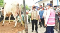 Seekor sapi yang akan disembelih sebagai penanda rasa syukur akan dibangun Pelabuhan Internasional Tanjung Carat di Kabupaten Banyuasin Sumsel (Nasir / Mattanews.co)