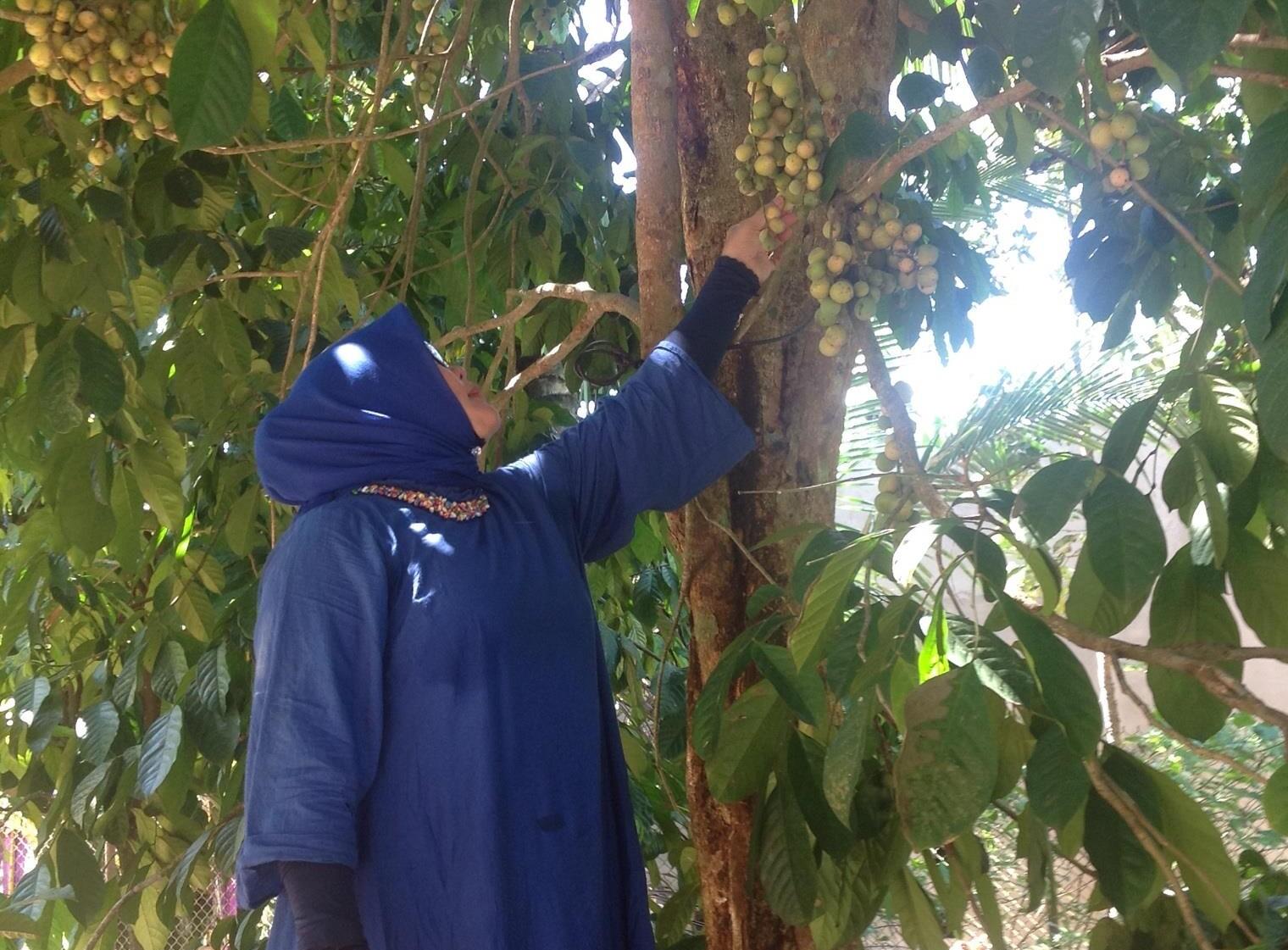 Ida Syahrul, pemilik kebun duku di OKU Timur yang sedang panen duku.